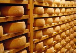 A produção de queijos artesanais maturados e a qualidade do leite