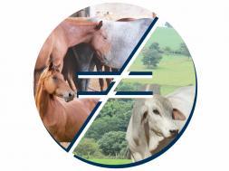 Equinos e Bovinos – Diferenças