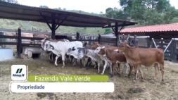 Homeopatia Hágil - Fazenda Vale Verde - Teófilo Otoni/MG