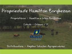 Homeopatia Hágil - Propriedade Hamilton Borghezan - Orleans / SC